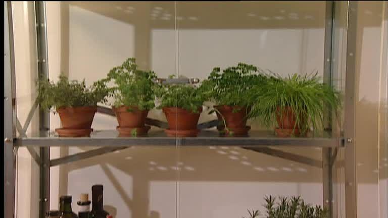 kräuter anbauen in der wohnung: tipps und tricks - sat.1 ratgeber, Garten und erstellen