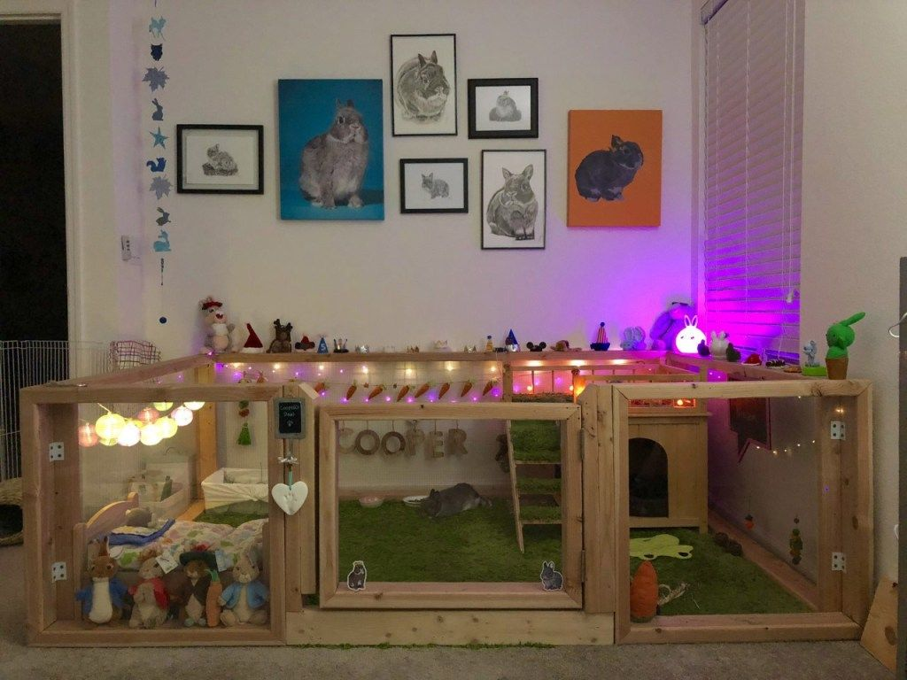 Rabbit enclosures in 2020 rabbit enclosure indoor