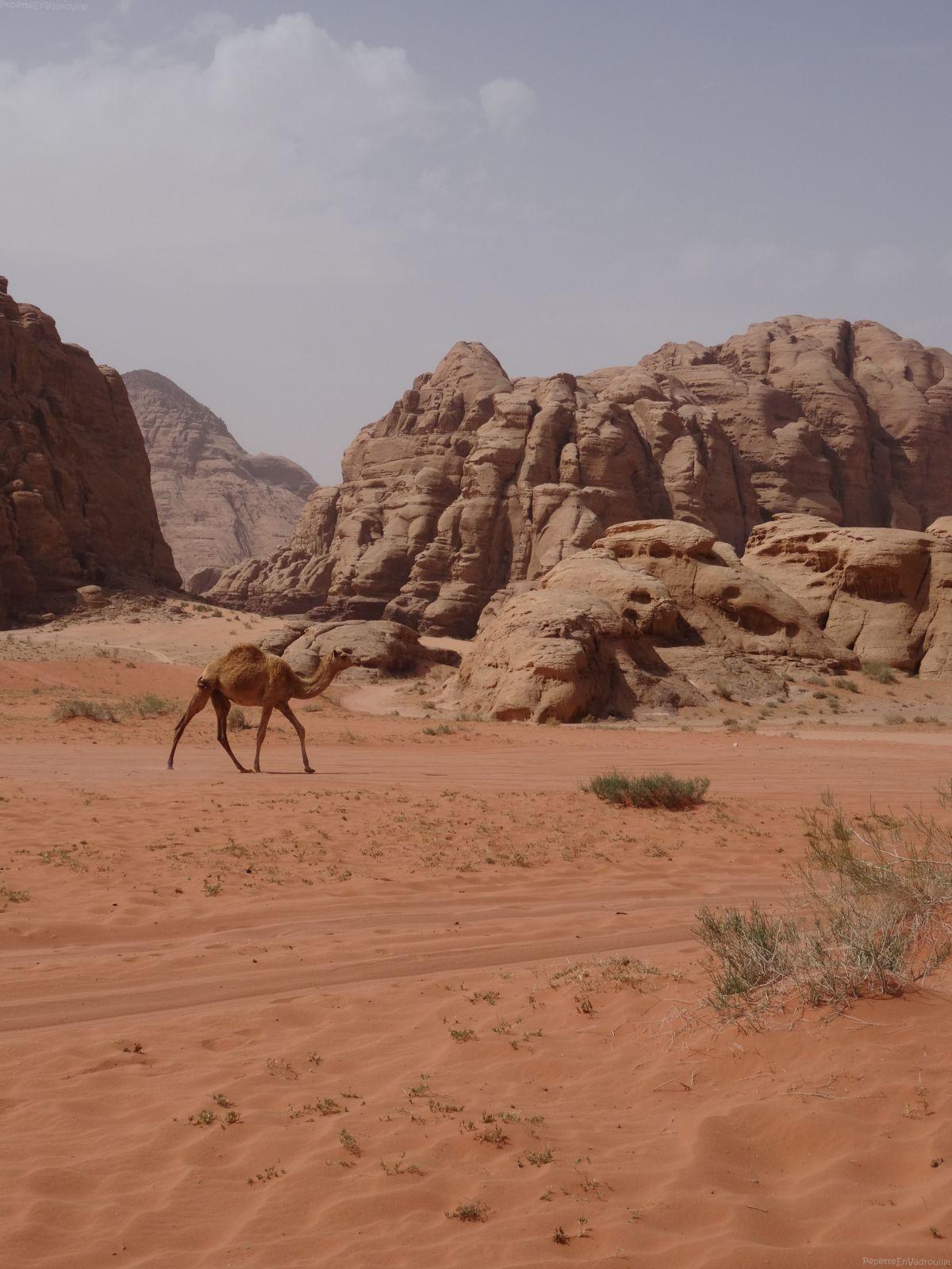 Jordanie: road trip de 2 semaines #wadirum