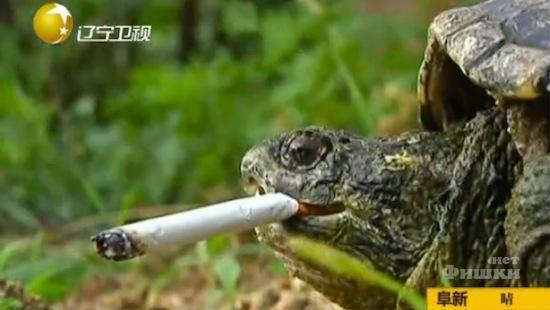 Turtle Got Addicted to Cigarettes