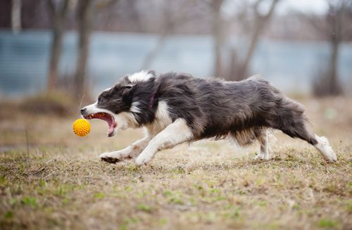 10 Dog Breeds With The Fewest Health Problems Dog Breeds