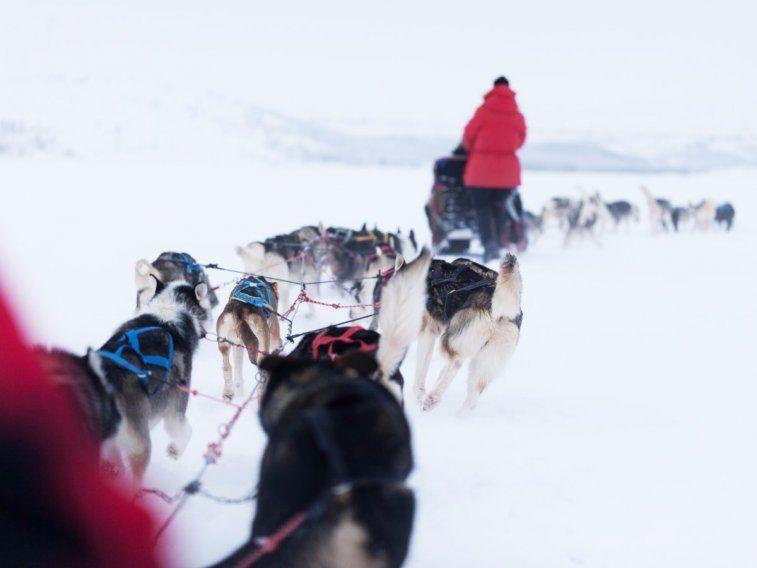 Im Norden Schwedens mit dem Hundeschlitten fahren.