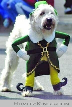 Cute St Patty S Day Dog Outfit A Little Leprachaun Pet