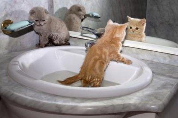 Bathe Each Kitten In The Sink Newborn Kittens Kitten Proofing Cats And Kittens