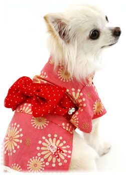 10 Kawaii Dogs In Kimonos Cute Animals Cute Dogs Dogs