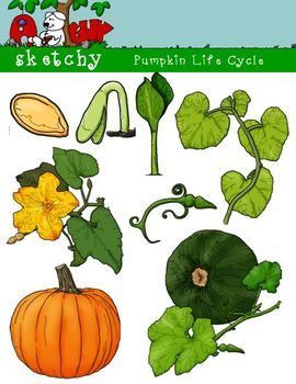 Pumpkin Life Cycle Clipart, Graphic - 300dpi Color Grayscale Black ...
