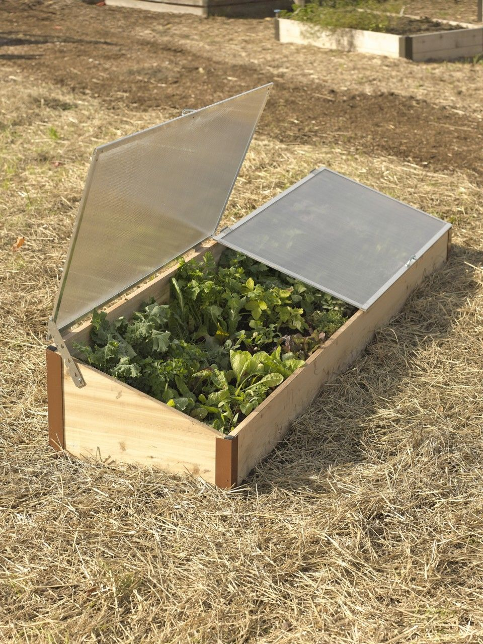 2x8 Cedar Cold Frame   Cold frame, Raised bed and Allotment