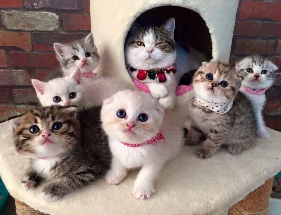 Seven kittens teen