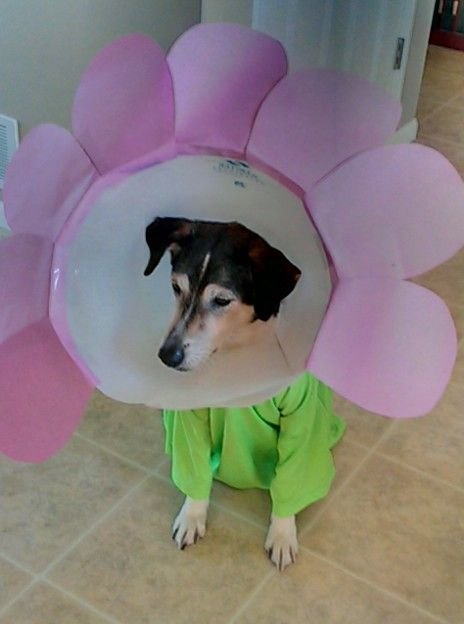 We Reused Our Dog S Cone For An Easy 15 Minute Halloween Costume