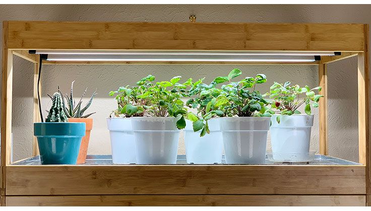 Growing Vegetables Indoors Under Led Grow Lights Growing 400 x 300