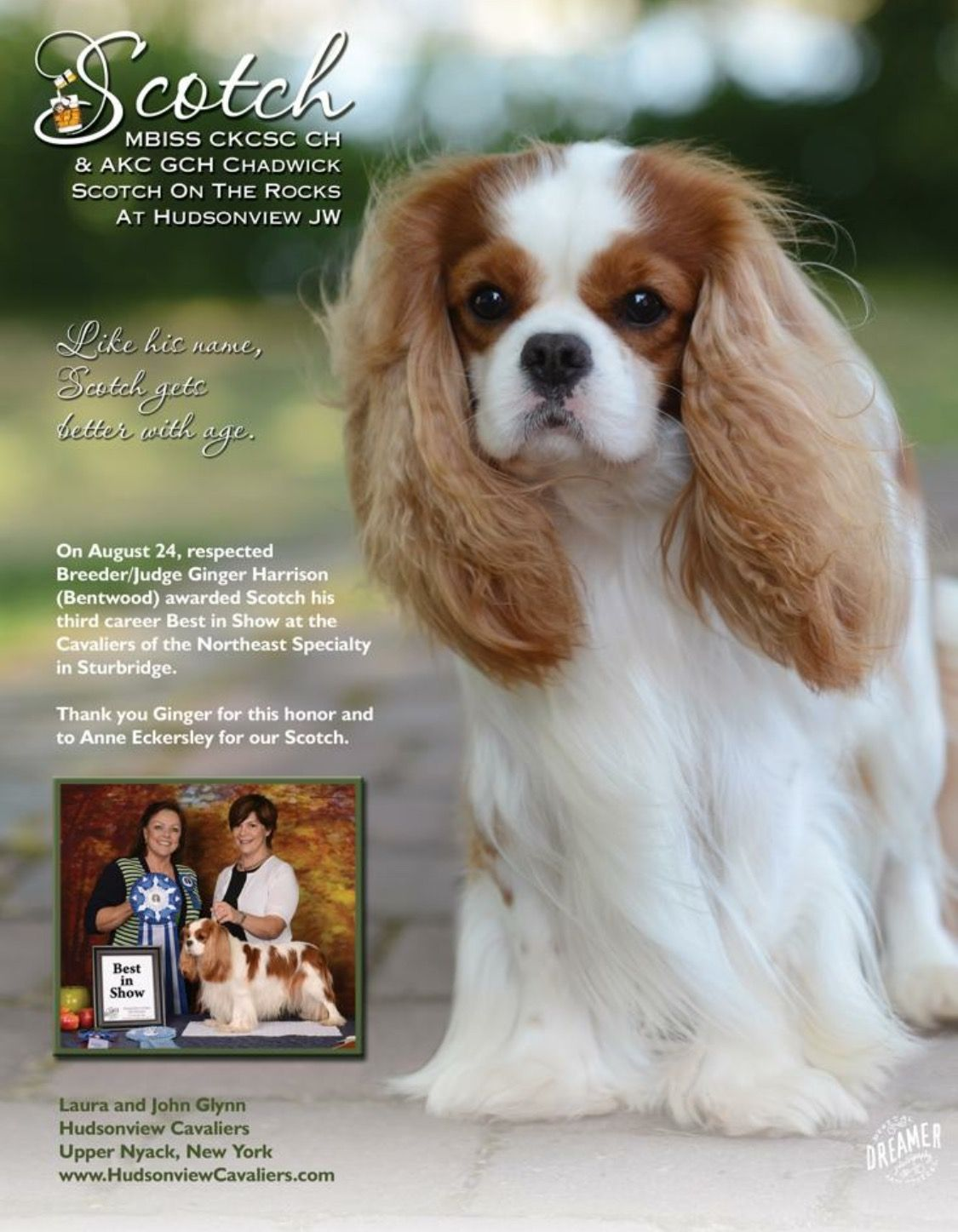 Pin On Cavalier King Charles Spaniels 1 Of 2