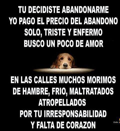 Asi Es Mascotas Frases Amor De Perro Amantes De Perros