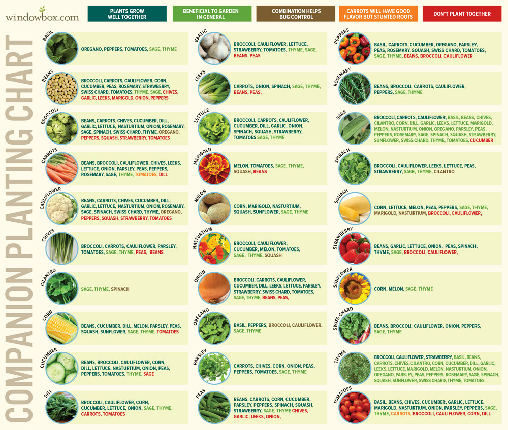 Companion Planting Chart for Vegetables and Fruits
