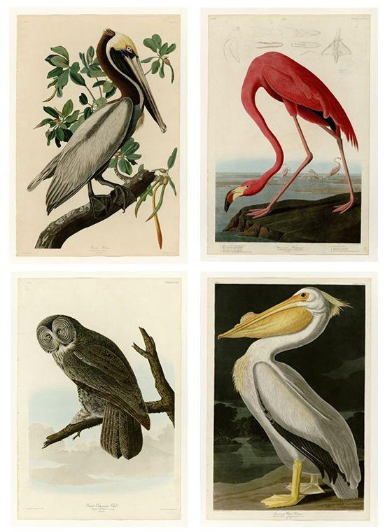 DIY Large Scale Art Antique Bird Illustrations / Printable Birds