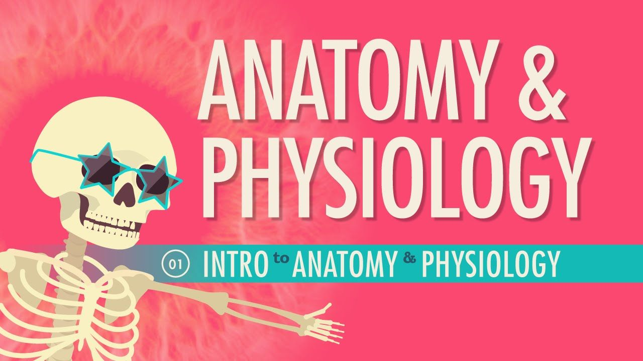 Introduction to Anatomy & Physiology: A&P #1 | Cuerpo humano y Cuerpo