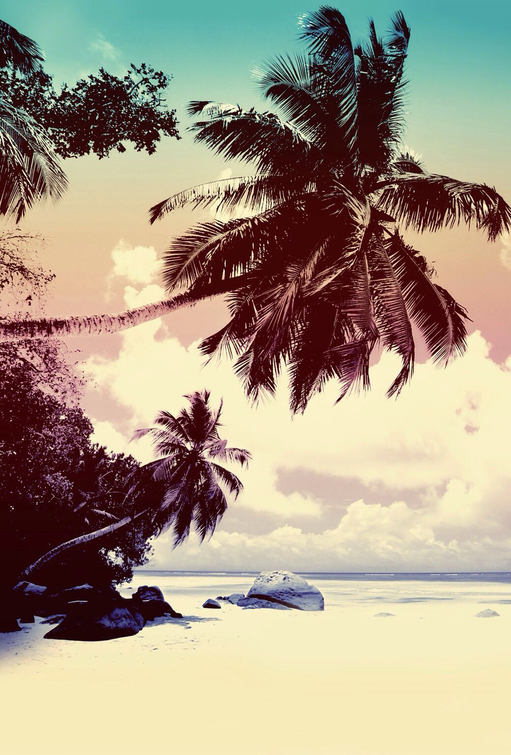 Palmen Am Strand In 2019 Palmen Am Strand Hintergrund Hintergrundbilder Desktop Hintergrund Weisser Hinte In 2020 Palm Trees Wallpaper Beach Wallpaper Tree Wallpaper