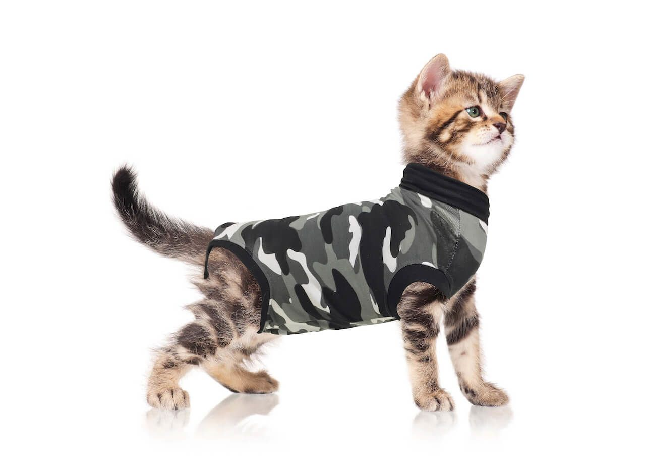 Recovery Suit Acts As A Second Skin To Protect And Cover Wounds Hot Spots Skin Conditions Diseases Light Incontinence Cat Pet Supplies Cat Diseases Pets