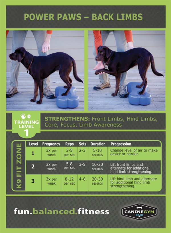 K9fitcard K9fitbone Back Pa With Images Dog Training Puppy Training Training Your Dog