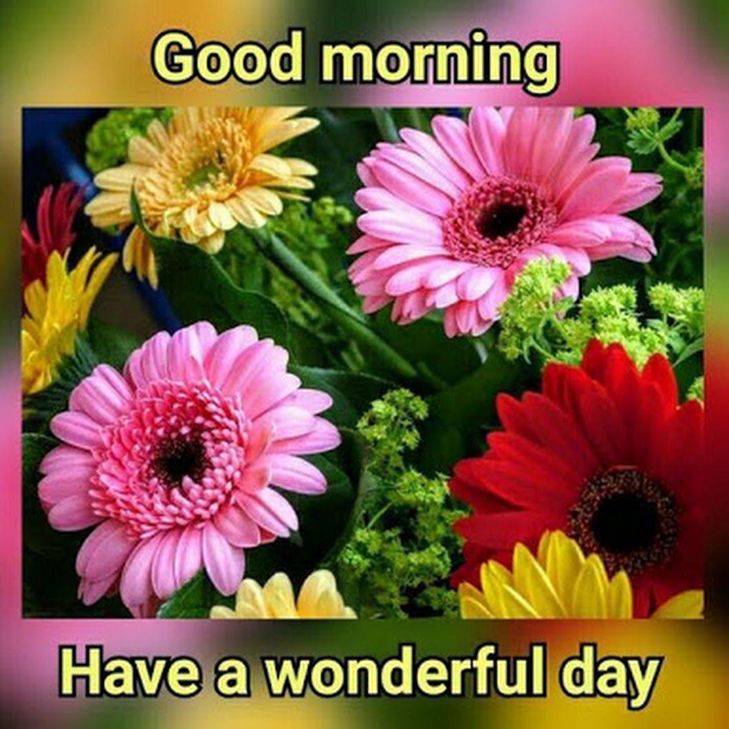 Sign In Good Morning Flowers Good Morning Beautiful Flowers Good Morning Images Flowers