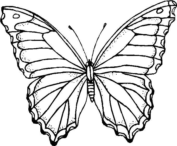 Risultati immagini per farfalle disegni farfalle disegni - Pagine da colorare per le farfalle ...
