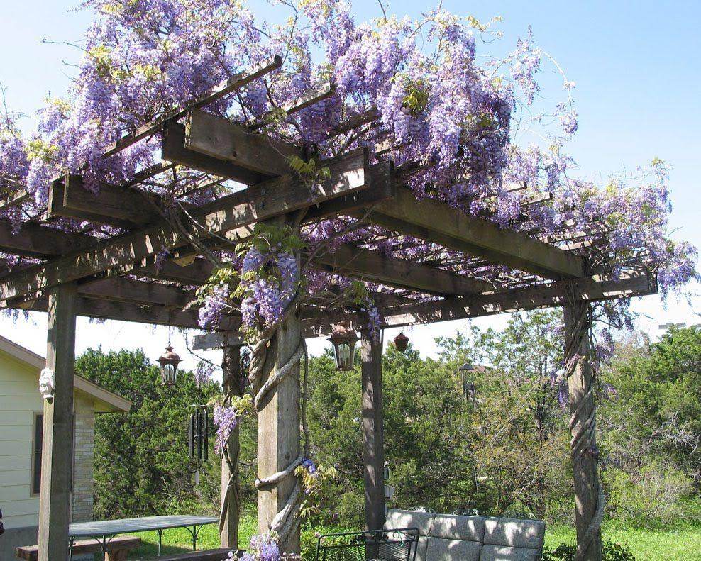wisteria trellis ideas