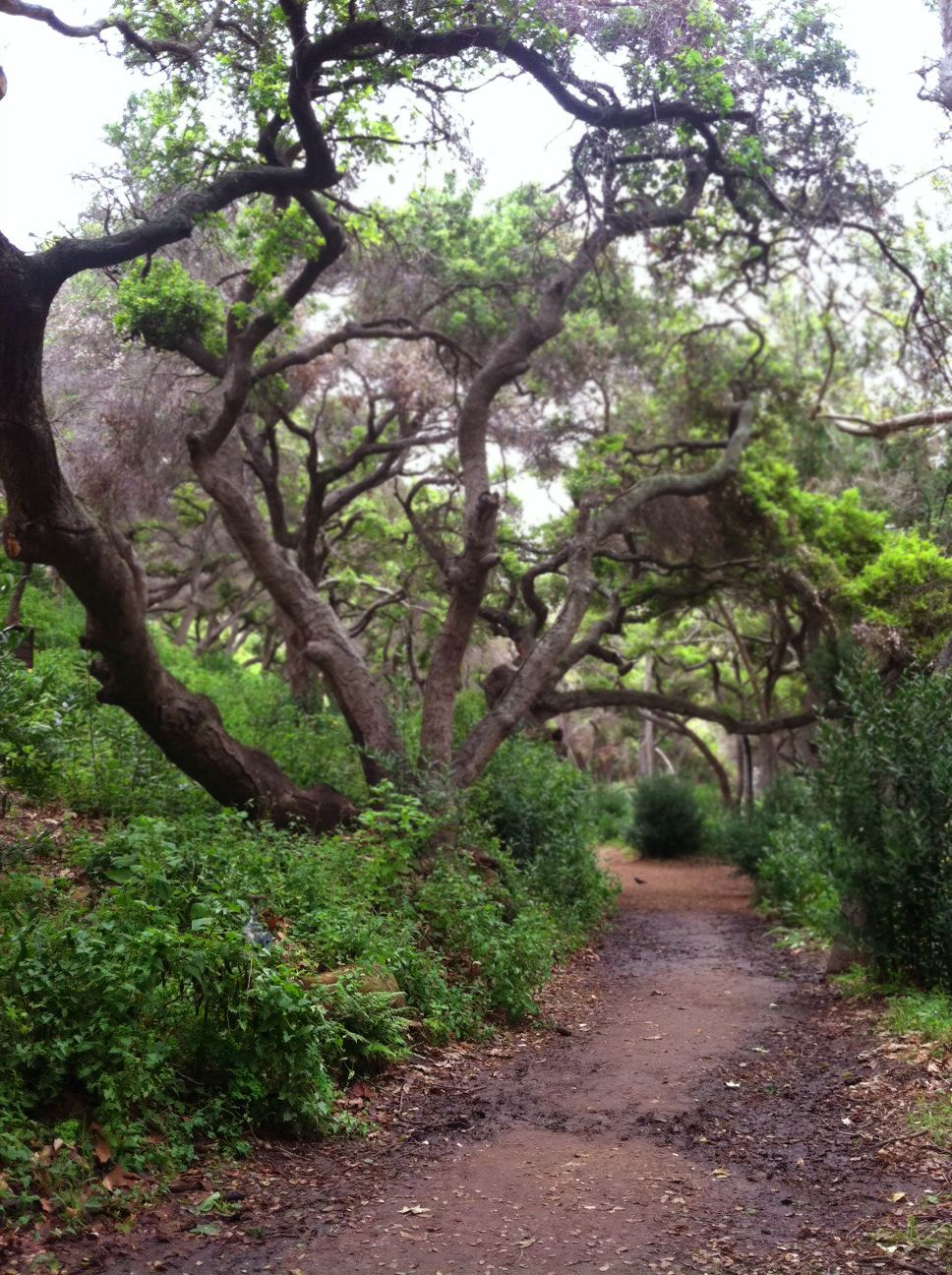 Santa Barbara Botanic Gardens
