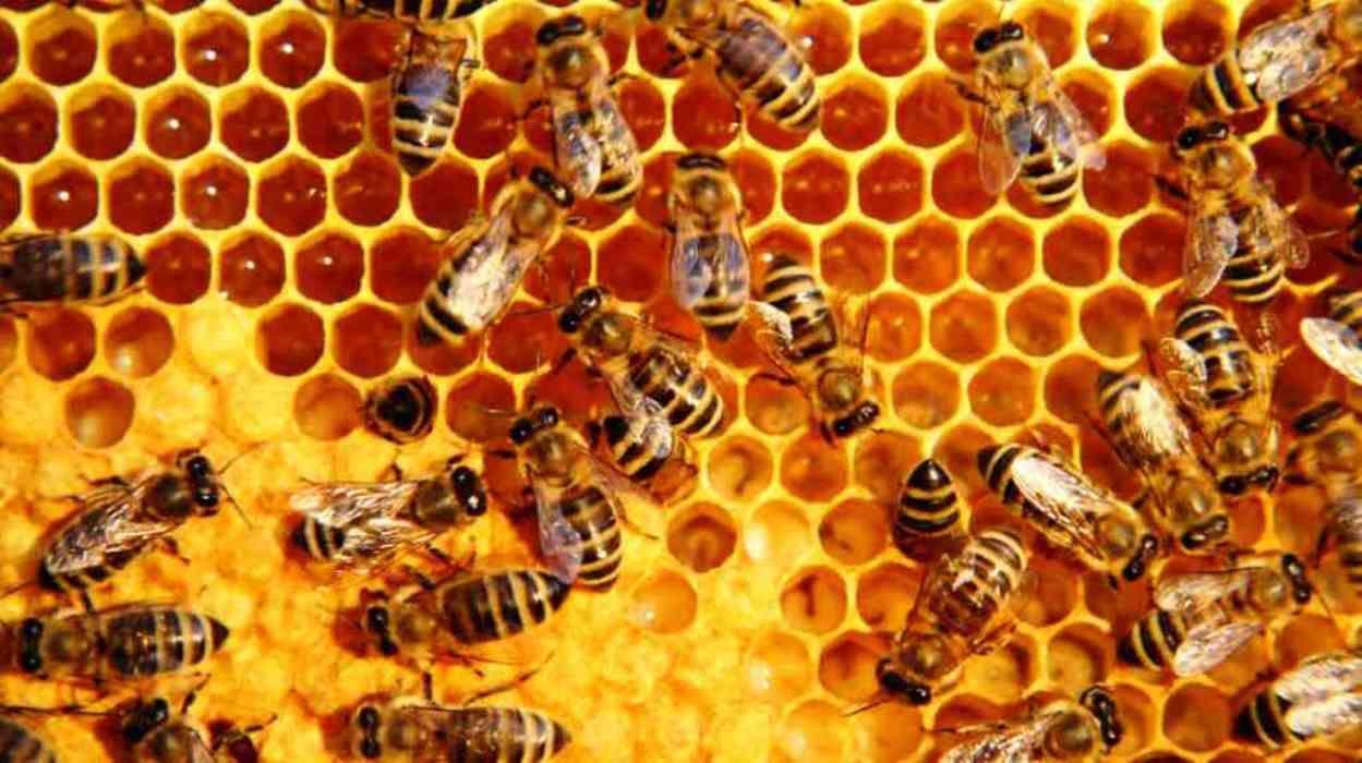 Te has preguntado ¿por qué las abejas hacen miel? Pues, porque es su ...