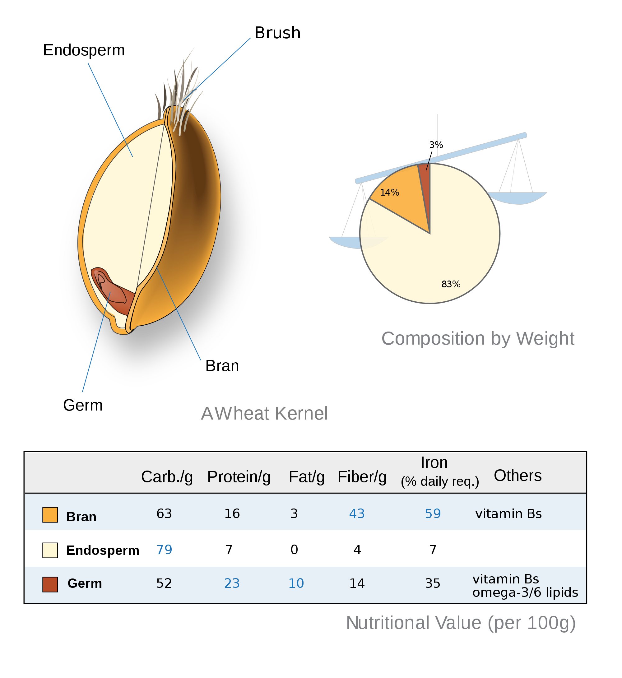 Anatomy Of A Grain Whole Grain Wisdom Pinterest Anatomy
