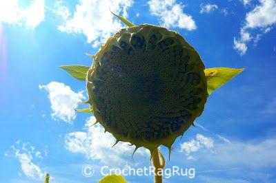 Support for Smallbiz : Auch der Sonnenblume war es bisserl zu warm heute