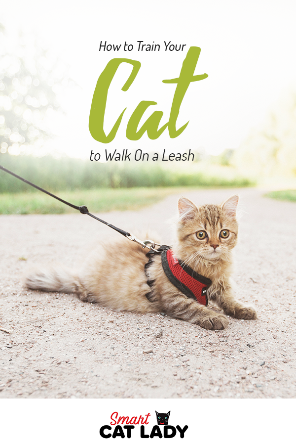 How to Train Your Cat to Walk On a Leash Cat training