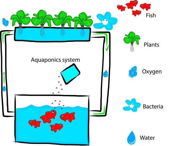 Diy everything you need to know to build a simple for Fish garden system