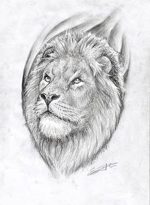Lion drawing by primitive-art on DeviantArt