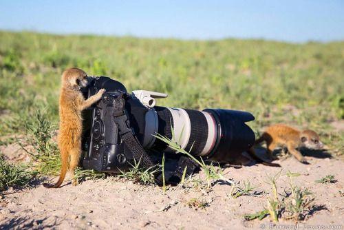 Absolutos fans de la fotografía