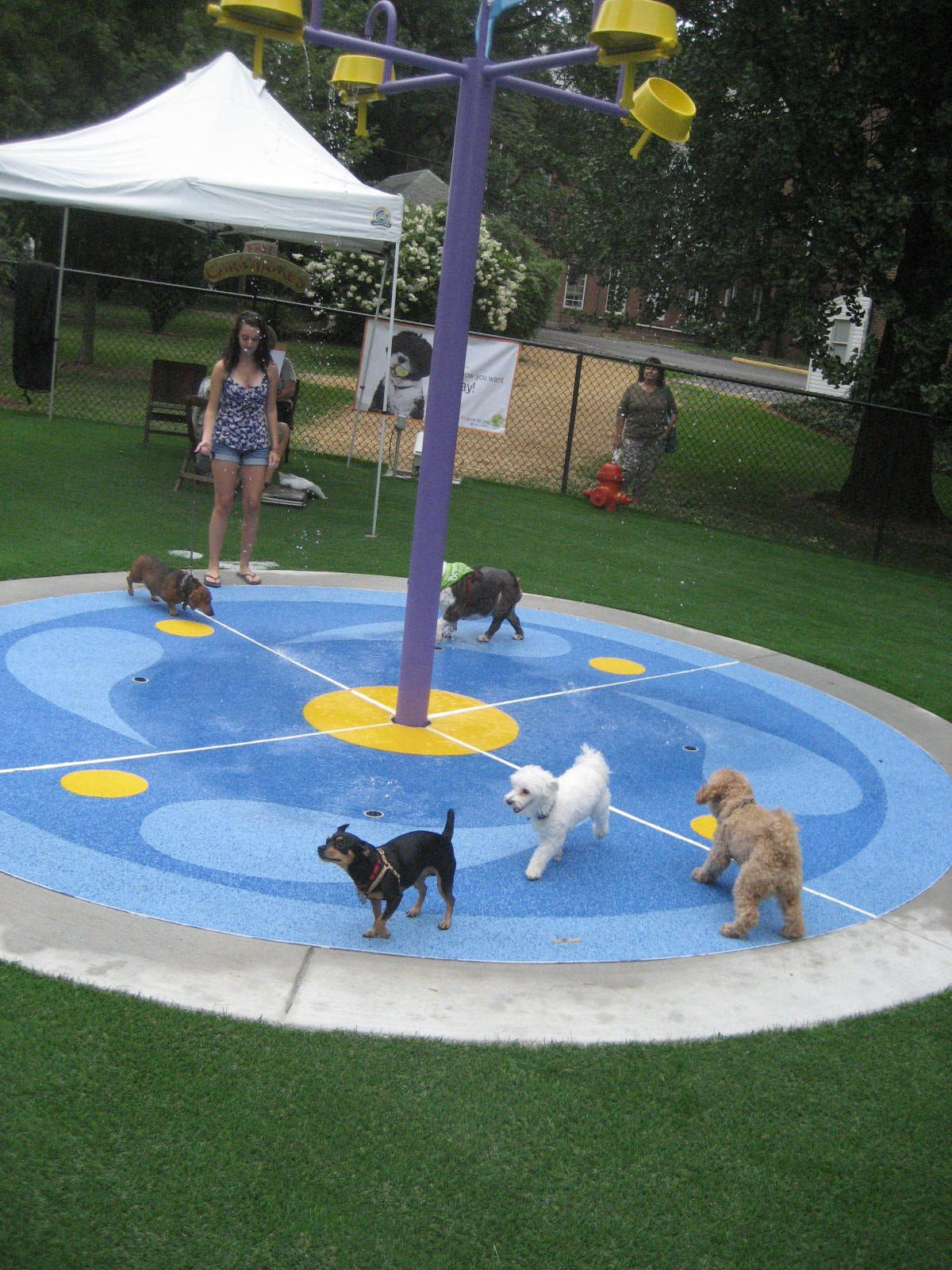 Pin By H2o Fido On Dog Spray Parks Dog Water Parks Splash Pads For Dogs By H2o Fido Dog Park Equipment Dog