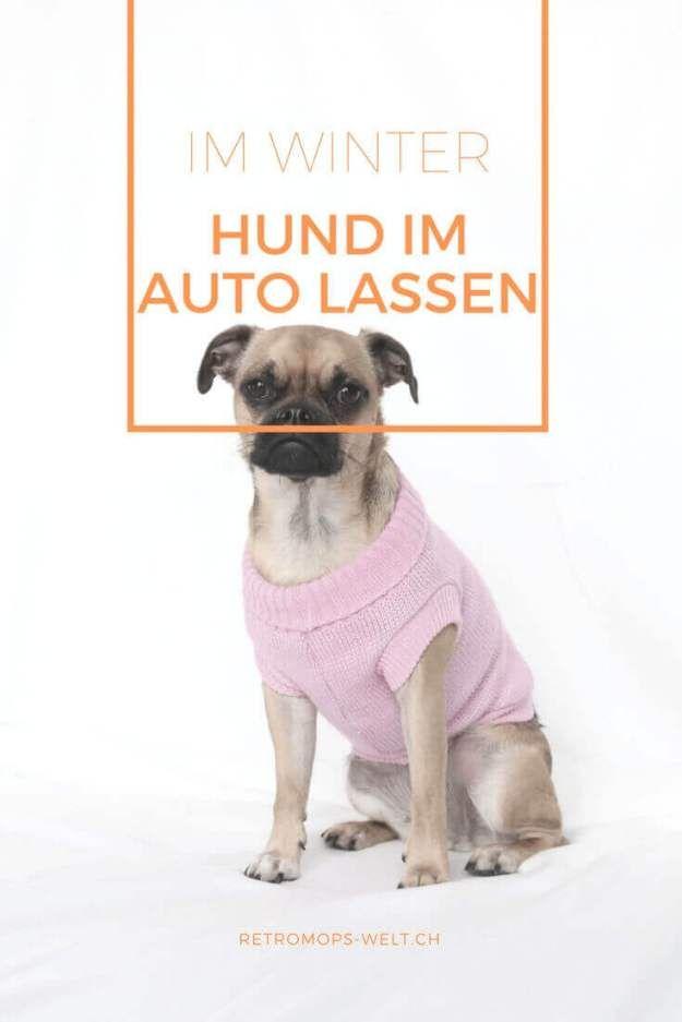 Hund im Auto lasse, auch im Winter ein Thema (mit Bildern