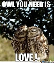 Owl Puns Google Search Awesome Animals Owl Animals