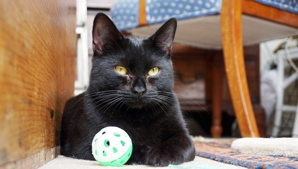 A Cat Who Can T Stop Crying Is Now On The Lookout For A New Home