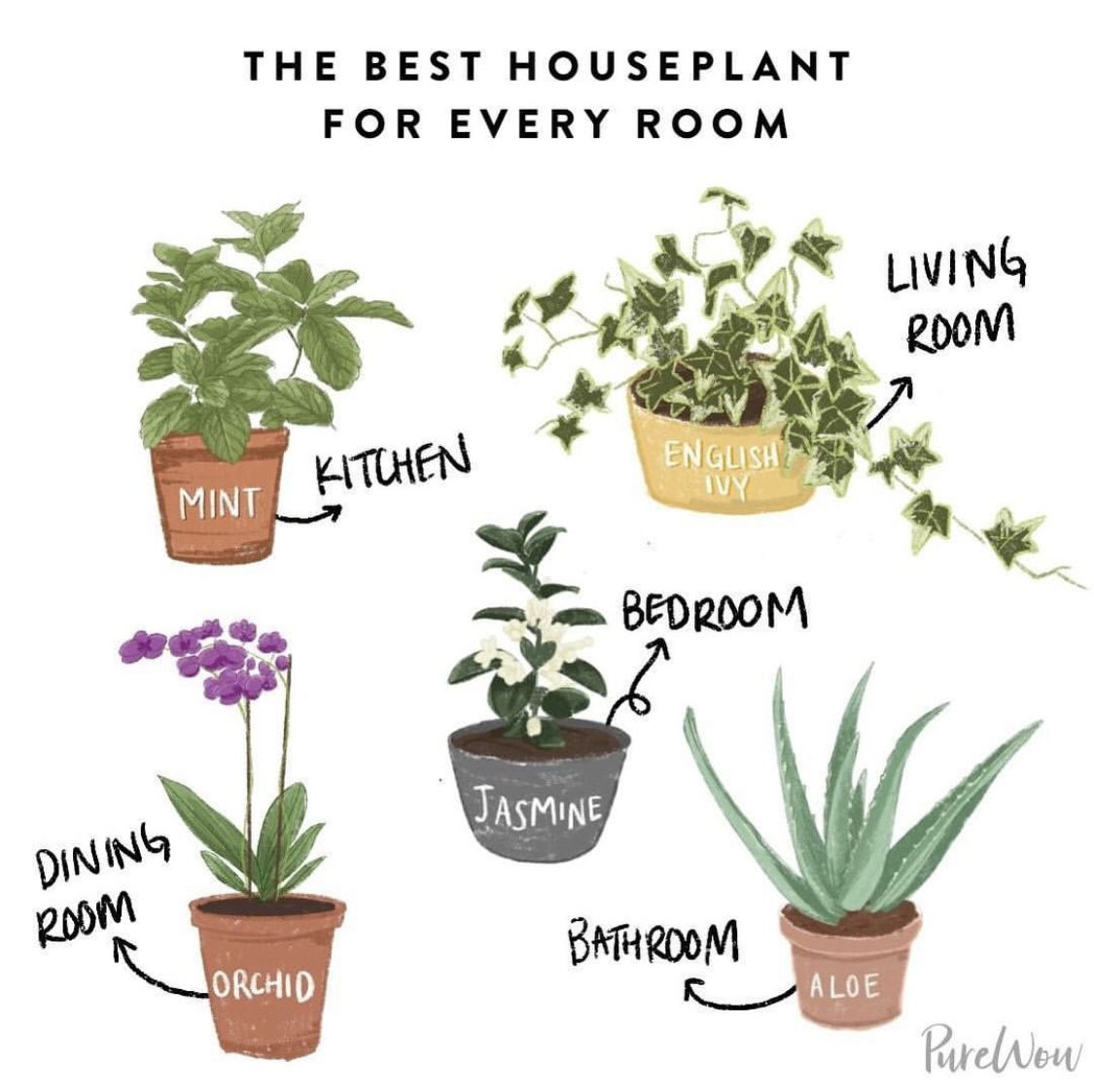 Best Plant For Each Room In The House Plants Cool Plants House Plants