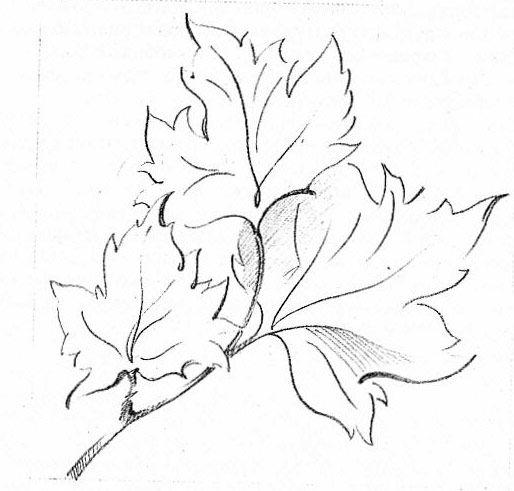 картинки рисунки листья