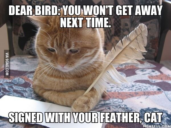 Dear Bird, Signed With Your Feather.