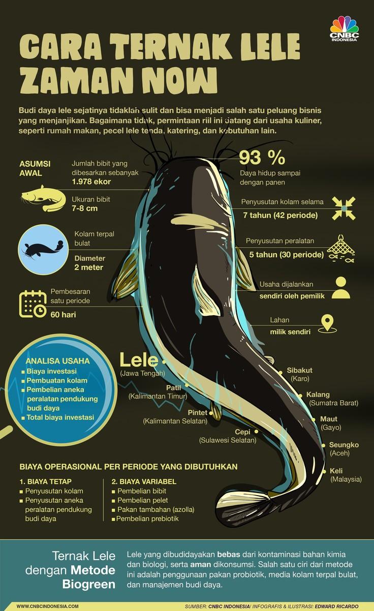 Budidaya Ikan Lele Kiat Bisnis Pemasaran Bisnis Pengetahuan