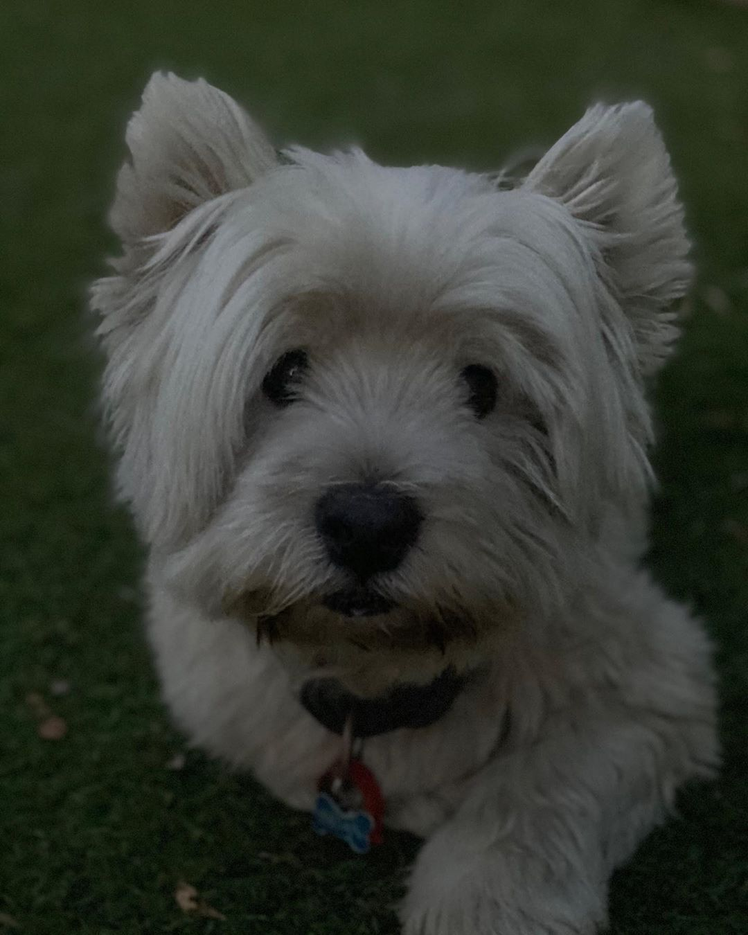 "𝐁 𝐑 𝐈 𝐀 𝐍 on Instagram: ""im pretty cool 🐾 #cute #dogs #cutedogs #lovedogs #doggo"""