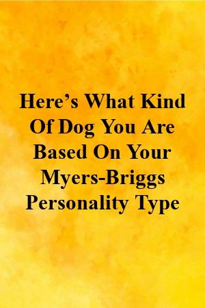 Here's What Kind Of Dog You Are Based On Your Myers-Briggs Personality Type #whatkindofdog