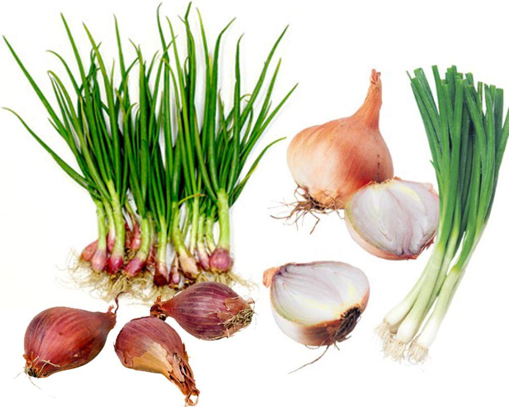 Green Onions Scallions Vs Shallots Shallots Onion Green Onions