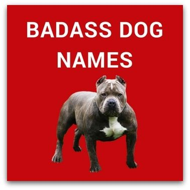 Badass Dog Names For Your Tough Dog Dog Names Girl Dog Names