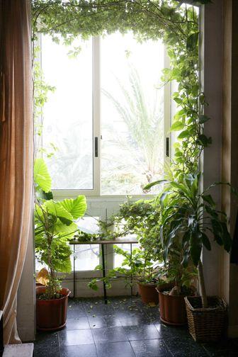 Plantas Dentro De Casa Com Imagens Jardinagem Interior Quartos De Plantas Janelas Jardim