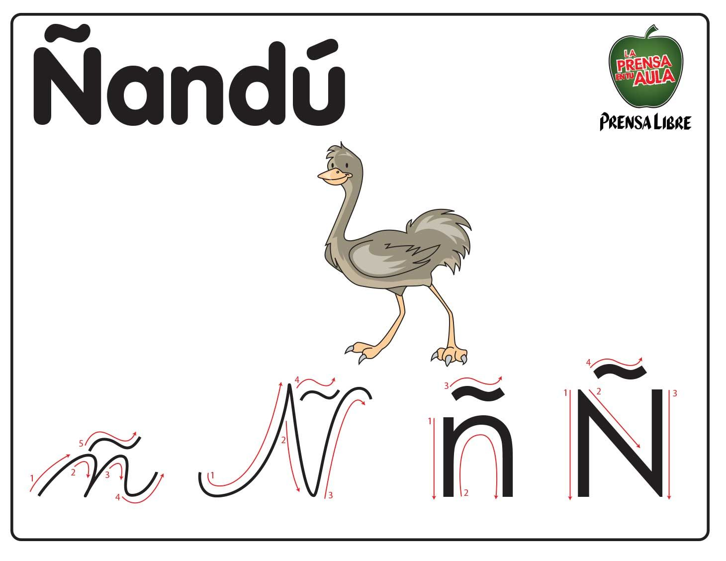 Nandu Rhea Bird The Rheas Are Large Ratites In The Order Rheiformes Native To South America Related To The Ost Abecedario Letras Del Abecedario Letra N
