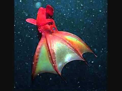 amazing deep sea creatures part 1 weird youtube