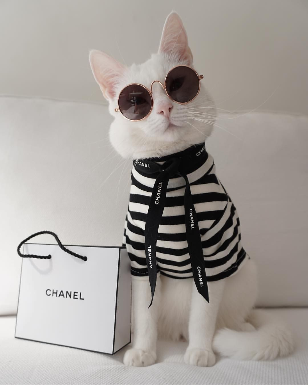 I Don T Do Fashion I Am Fashion Zappa The Cat Coco Chanel Catsofinsta Cuteness Sunnies Animallover Cats Cute Baby Animals Cute Cats Cute Animals