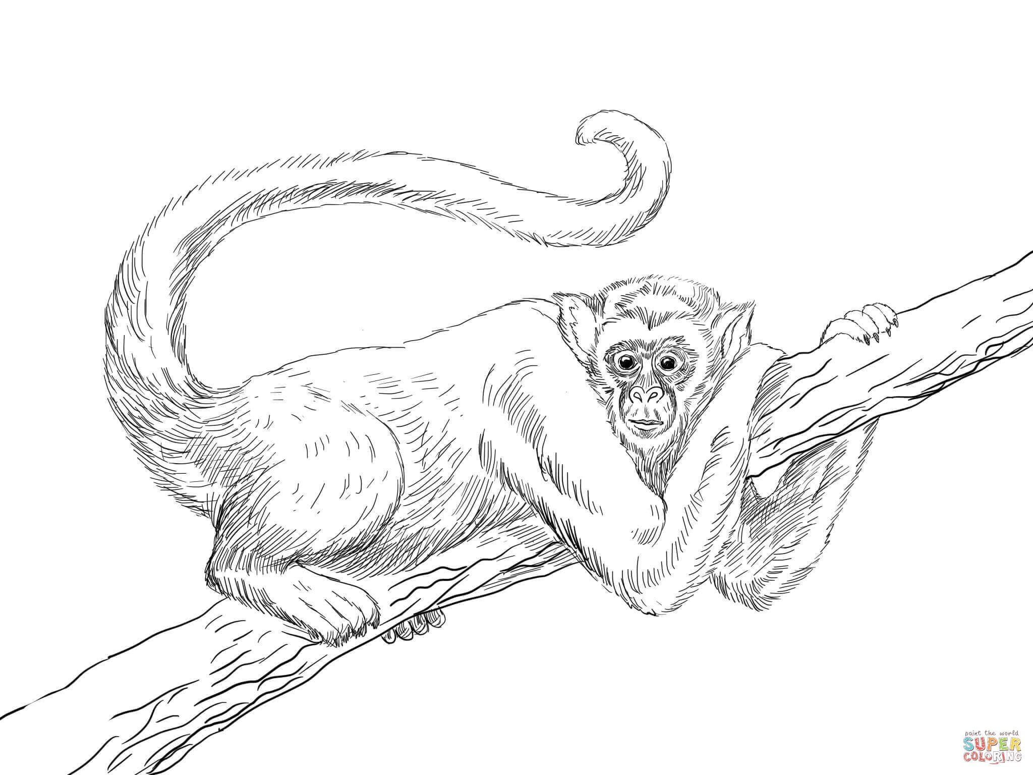 muriqui wooly spider monkey coloring page jpg 2048 1536 frida
